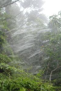 Spiderwebs at Professors Camp