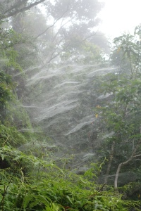 Spiderwebs at Professors Camp