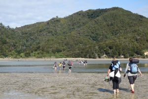 Great Walks can be busy. An estuary crossing on the Abel Tasman trail.